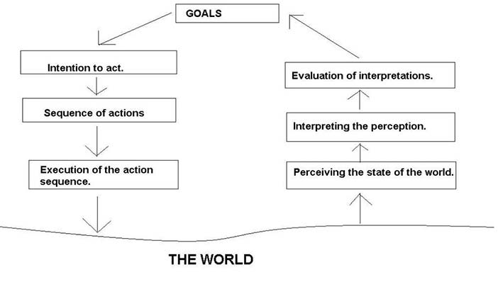 The seven step action cycle