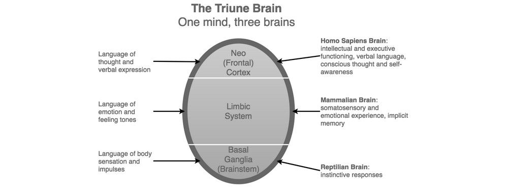 "The Concept of the ""Triune Brain"""